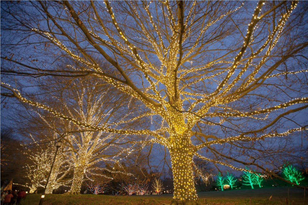 Longwood Gardens holiday lights display is up through Jan.
